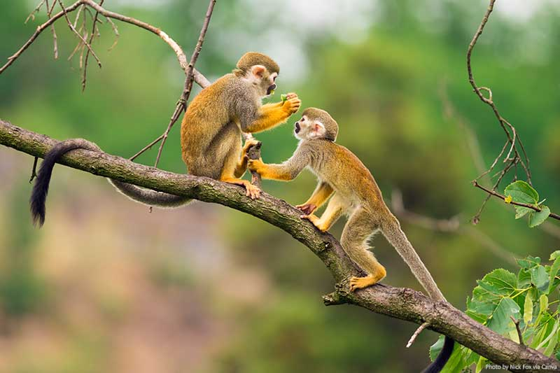 Monkeys in the Amazon