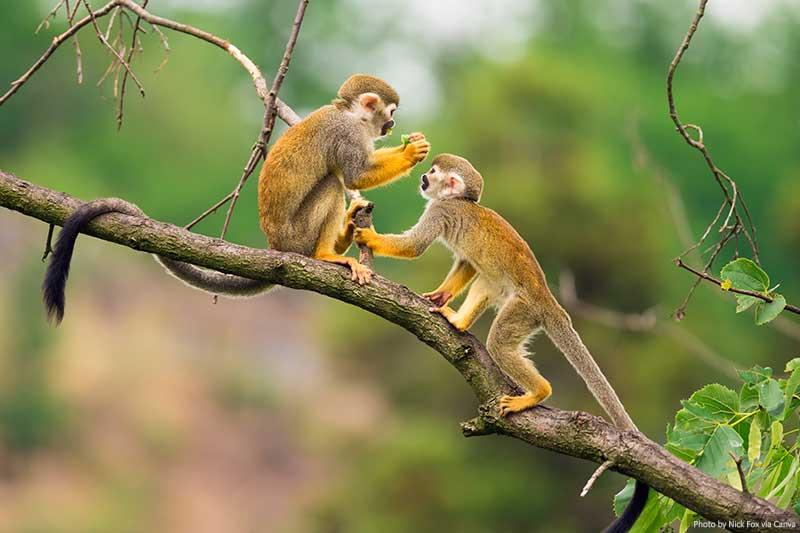 "Monkeys in the Amazon ""width ="" 800 ""height ="" 533 ""srcset ="" https://www.travelanddestinations.com/wp-content/uploads/2020/05/Monkeys-in-the-Amazon.jpg 800w, https: //www.travelanddestinations.com/wp-content/uploads/2020/05/Monkeys-in-the-Amazon-300x200.jpg 300w, https://www.travelanddestinations.com/wp-content/uploads/2020/ 05 / Monkeys-in-the-Amazon-768x512.jpg 768w, https://www.travelanddestinations.com/wp-content/uploads/2020/05/Monkeys-in-the-Amazon-270x180.jpg 270w ""sizes ="" (maximum width: 800 px) 100 vw, 800 px"