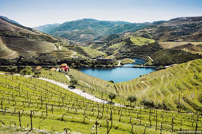 Vineyards in Douro valley with river, Portugal