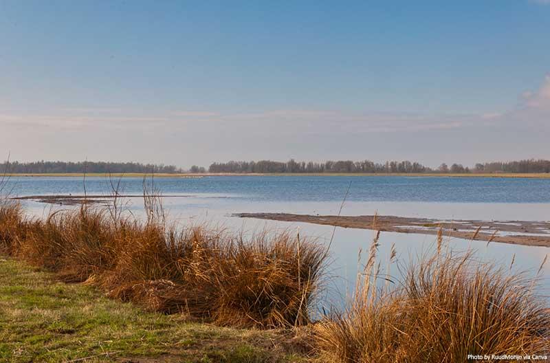 National Park De Biesbosch