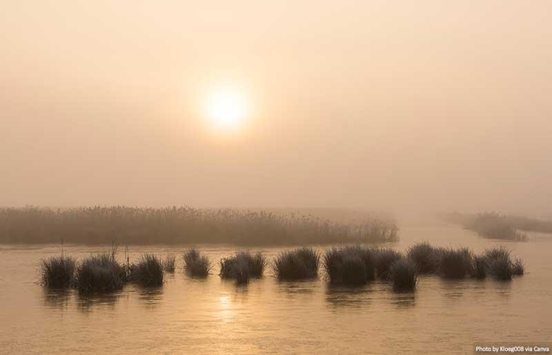 Winter Morning in Weerribben and Wieden