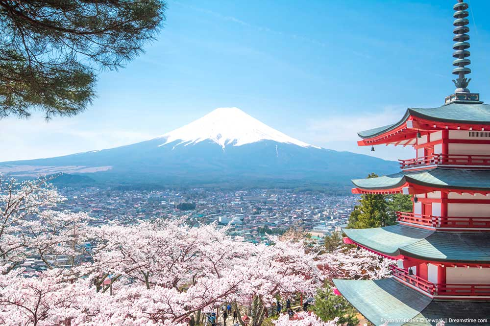 Mount Fuji views with Cherry Blossoms
