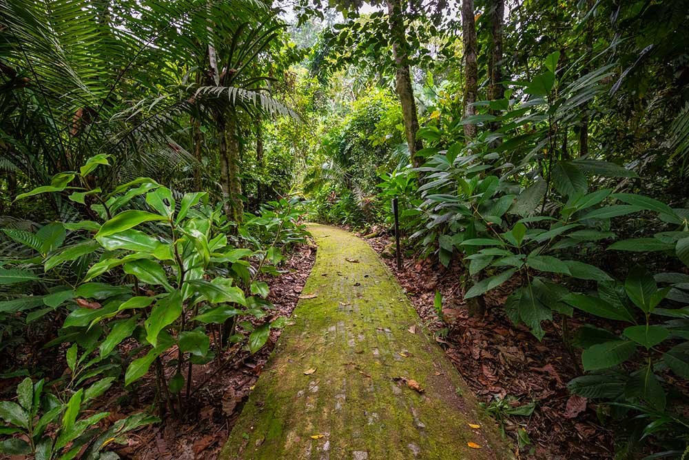 Yasuni paths in the forest