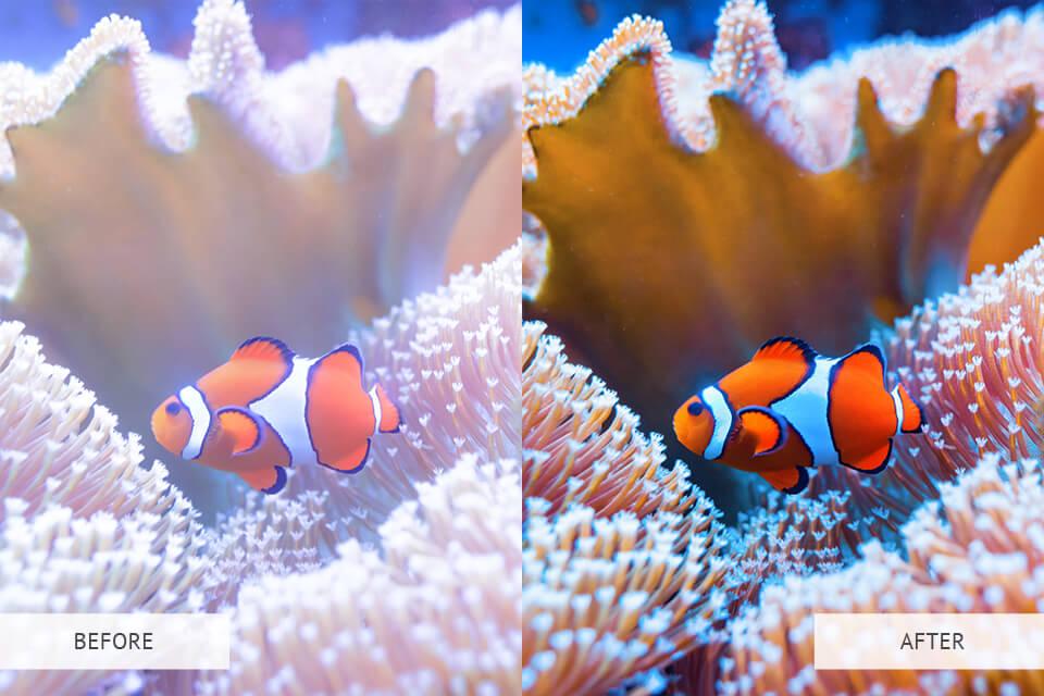 Example of Underwater Lightroom Presets