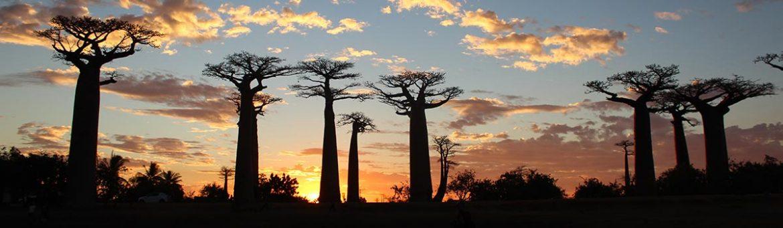 Book Madagascar - Featured Image