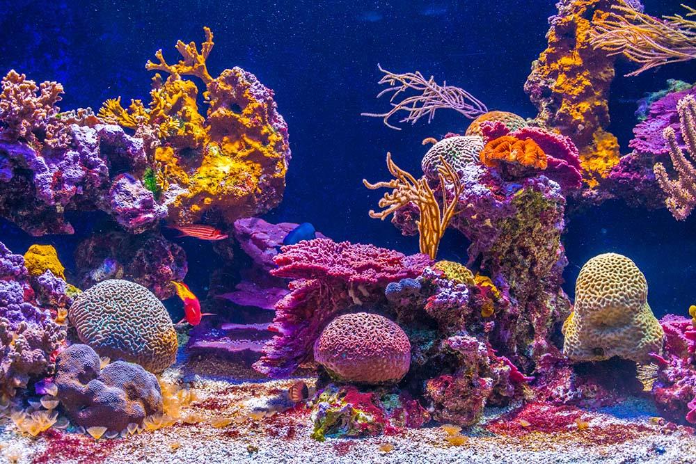Display at Oceanographic Museum in Monaco